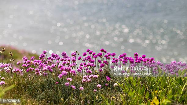 wildflowers and paddleboarders - s0ulsurfing stock pictures, royalty-free photos & images