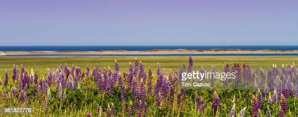 wildflowers at fort hill - caputo foto e immagini stock