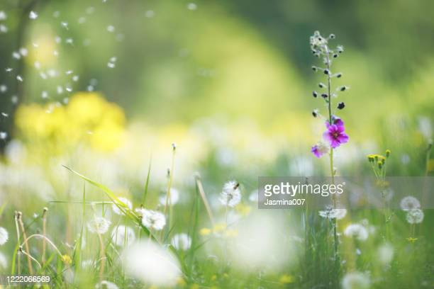wildflowers background - allergy stock pictures, royalty-free photos & images
