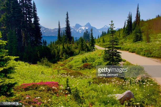Wildflowers bloom along Skyline Trail, Mount Rainier National Park, Washington State, USA