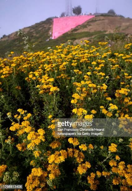 Wildflowers bloom below the giant pink triangle installed on Twin Peaks to kick off Pride weekend festivities in San Francisco, Calif. On Saturday,...