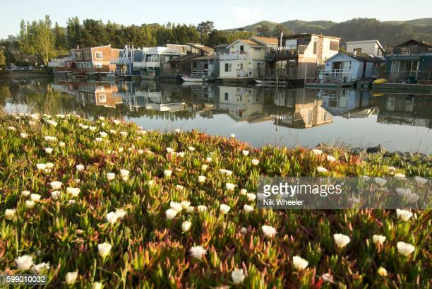 Wildflowers blooming across from houseboats
