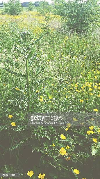wildflowers blooming on field - mcconnell stock pictures, royalty-free photos & images