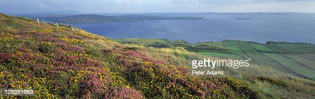 wildflowers, clifden, connemara, ireland - peter adams stock pictures, royalty-free photos & images
