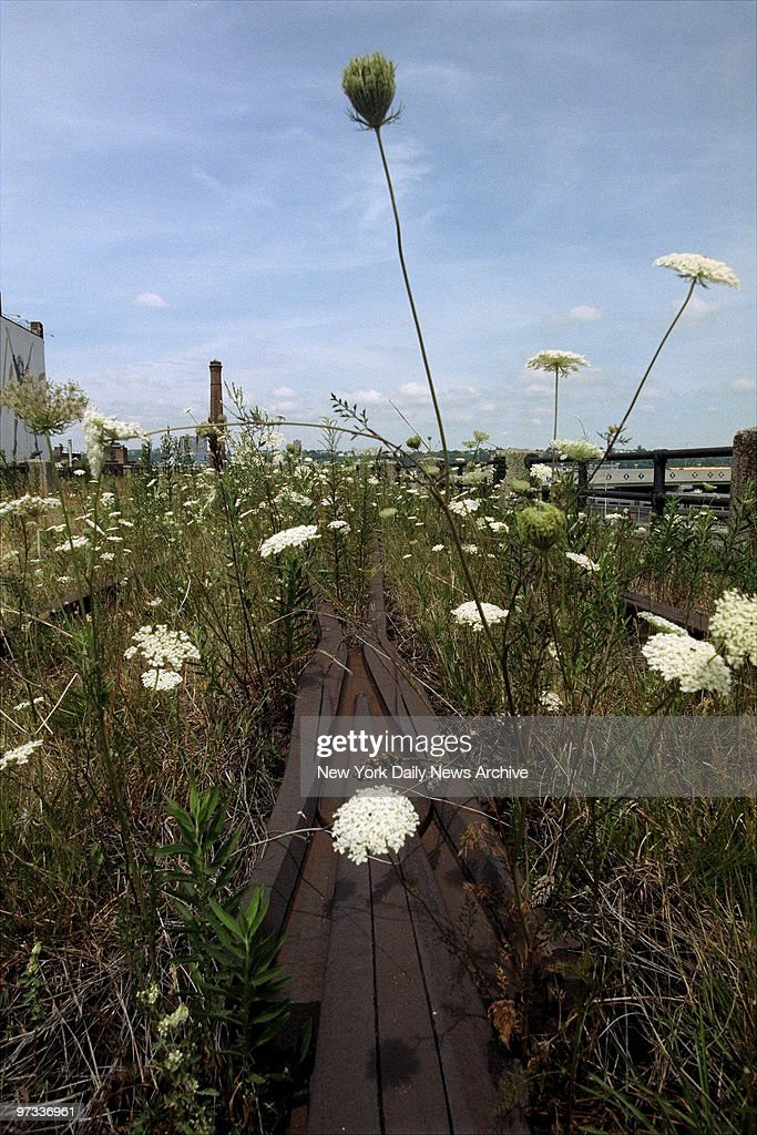 Wildflowers grow on the rusted tracks of the 1.5-mile High L : News Photo