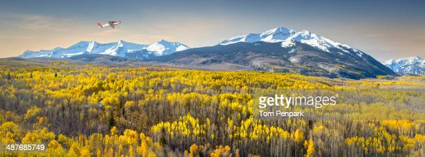 Wildflowers growing in mountain landscape, Crested Butte, Colorado, United States