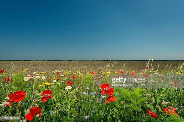 wildflowers growing in rural field - biddingshuizen stockfoto's en -beelden