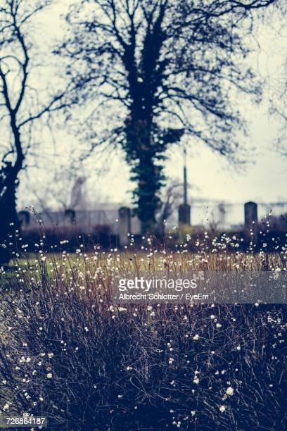 wildflowers growing on field - albrecht schlotter foto e immagini stock