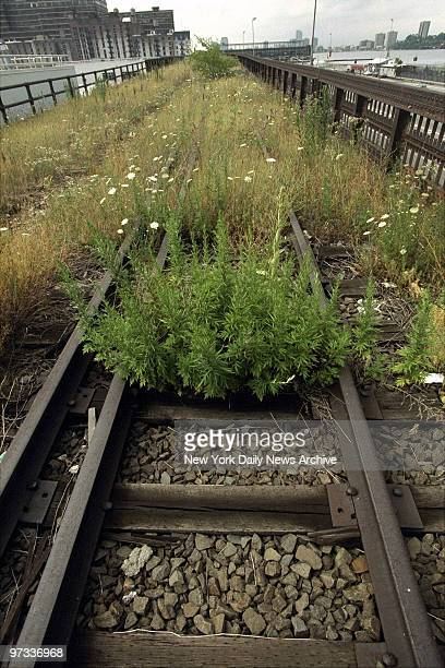 Wildflowers high grass and weeds grow on the tracks of the 15mile High Line an abandoned elevated spur built 70 years ago to carry freight to...