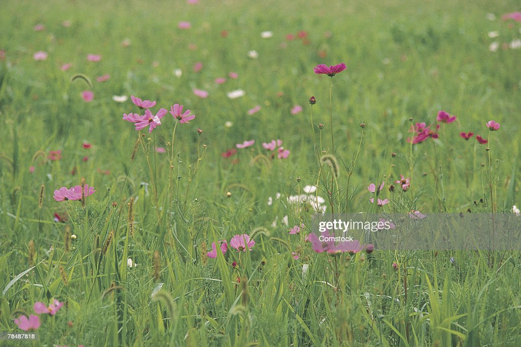 Wildflowers in a field : Stock Photo