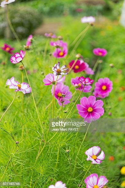 wildflowers in a garden - jean marc payet stock pictures, royalty-free photos & images