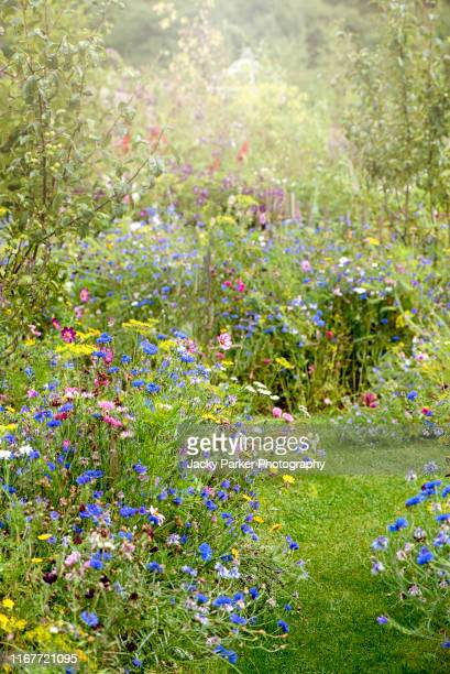 wildflowers in and english cottage garden with a grass path, in the soft summer sunshine - grass stock pictures, royalty-free photos & images