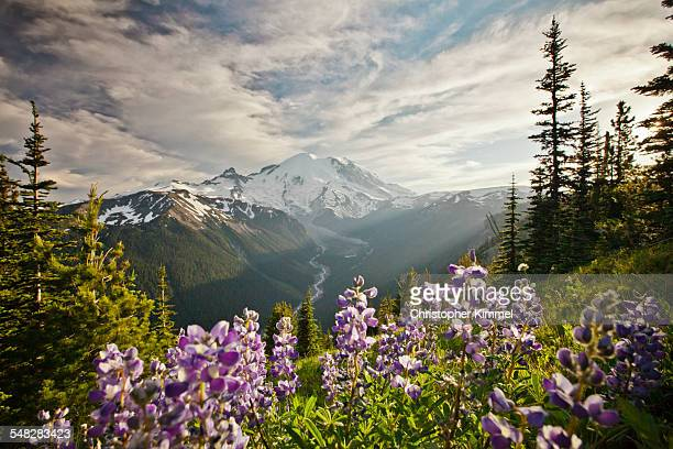 Wildflowers in Mount Ranier National Park
