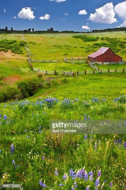 CONTENT] Wildflowers in summer in Colorado