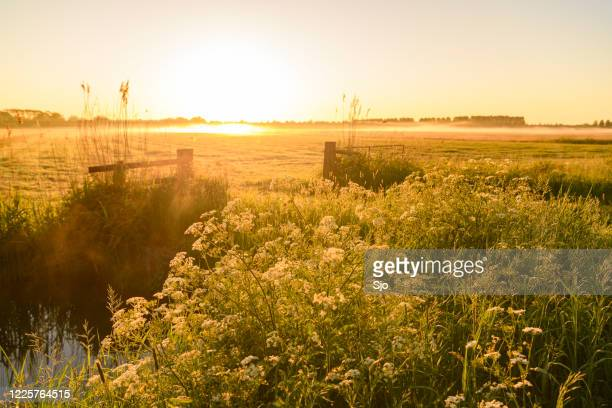 "wildflowers in the countryside during an early morning springtime sunrise - ""sjoerd van der wal"" or ""sjo"" stock pictures, royalty-free photos & images"