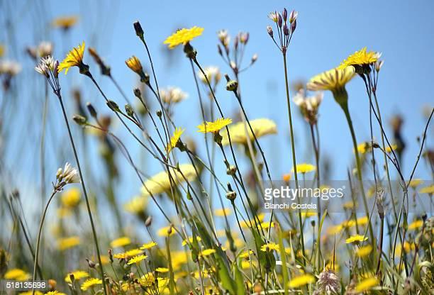 Wildflowers in the field in spring
