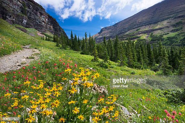 Wildflowers in the Rockies