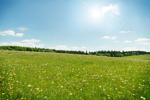 Wildflowers meadow under blue sky 906645160