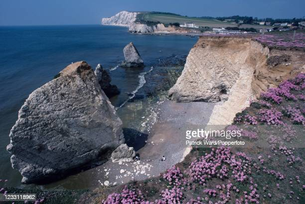 Wildflowers on a cliff overlooking the beach at Freshwater Bay on the Isle of Wight, circa August 1996.