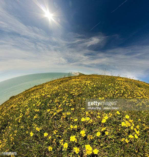 wildflowers on coastline - s0ulsurfing stock-fotos und bilder