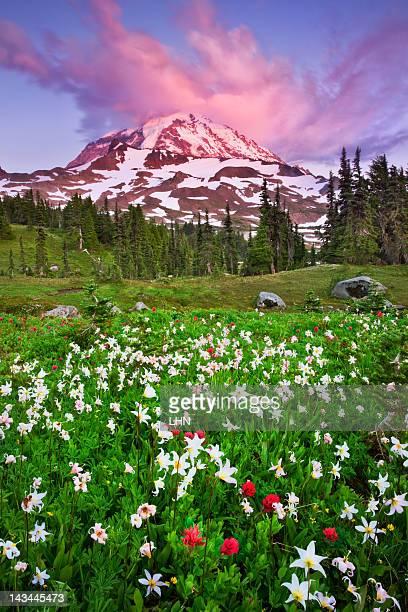 Wildflowers on Mt Rainier