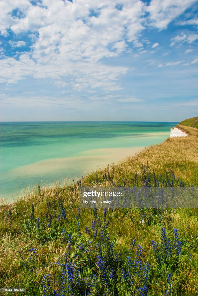 Wildflowers on the Cliff : Stock Photo