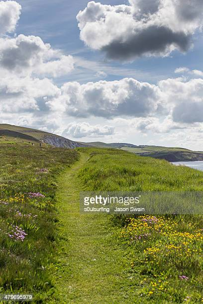 wildflowers on the isle of wight coastal path - s0ulsurfing stock pictures, royalty-free photos & images