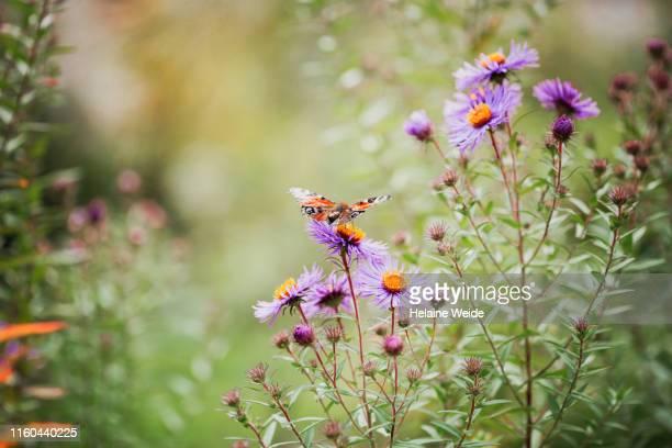 wildflowers - niet gecultiveerd stockfoto's en -beelden