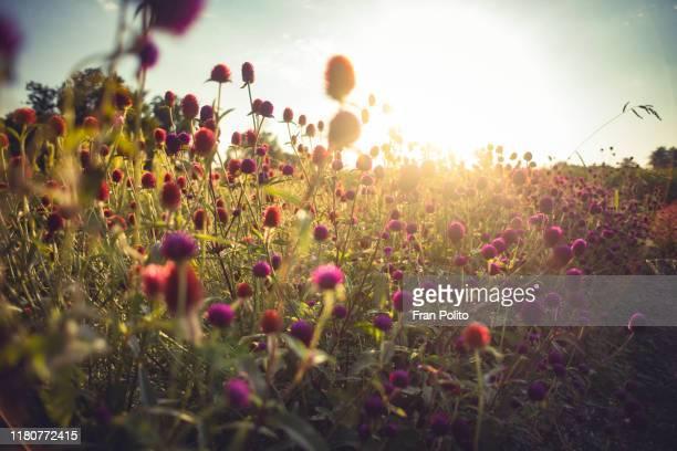 wildflowers - insekt stock-fotos und bilder