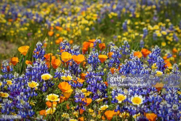 wildflowers - 野生の花 ストックフォトと画像