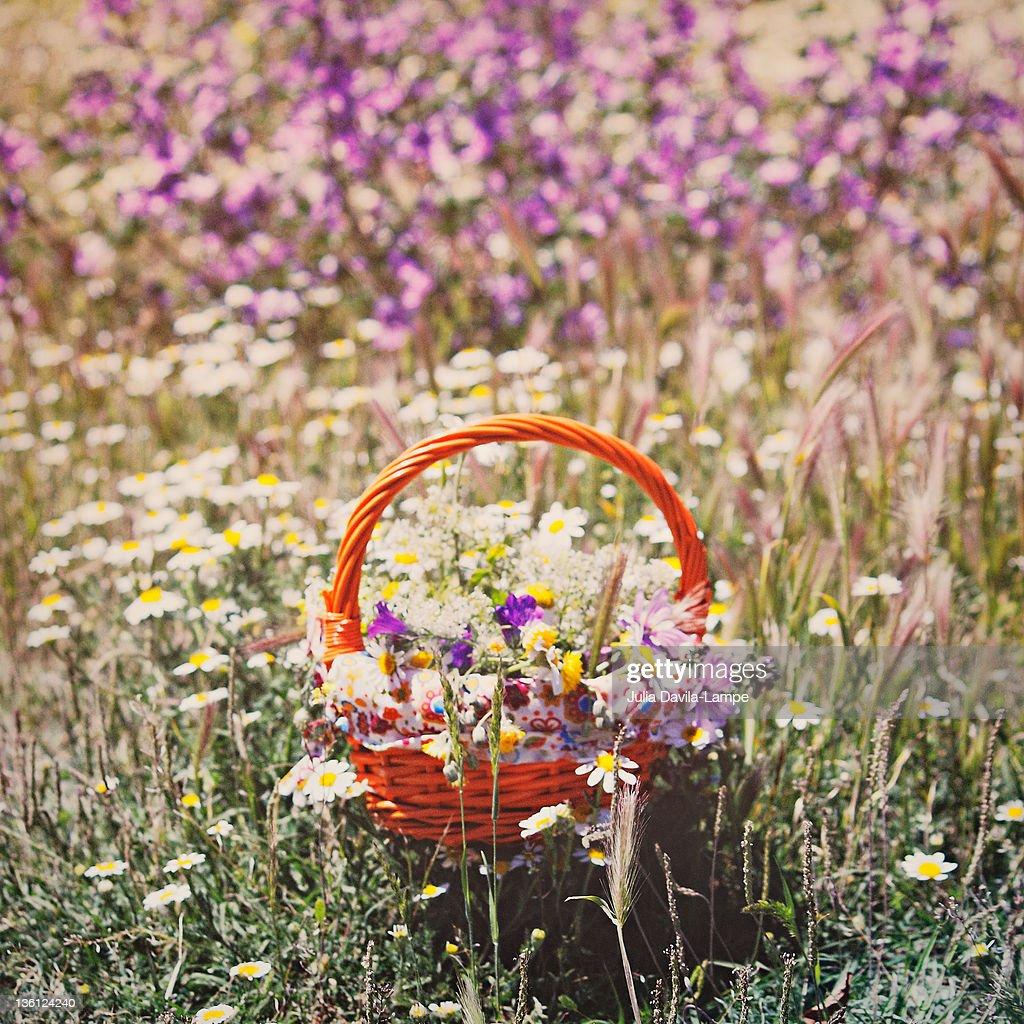Wildflowers : Stock Photo
