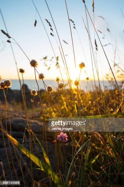 wildflowers - arquipélago - fotografias e filmes do acervo