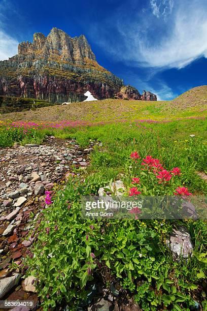 Wildflowers & rugged mountain, summer, Glacier MT