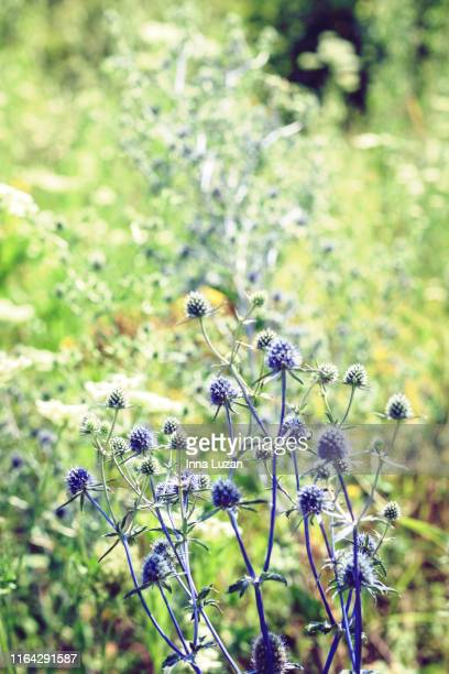 wildflowers with green leaves texture background