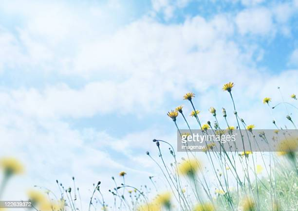 Wildfrowers under sky