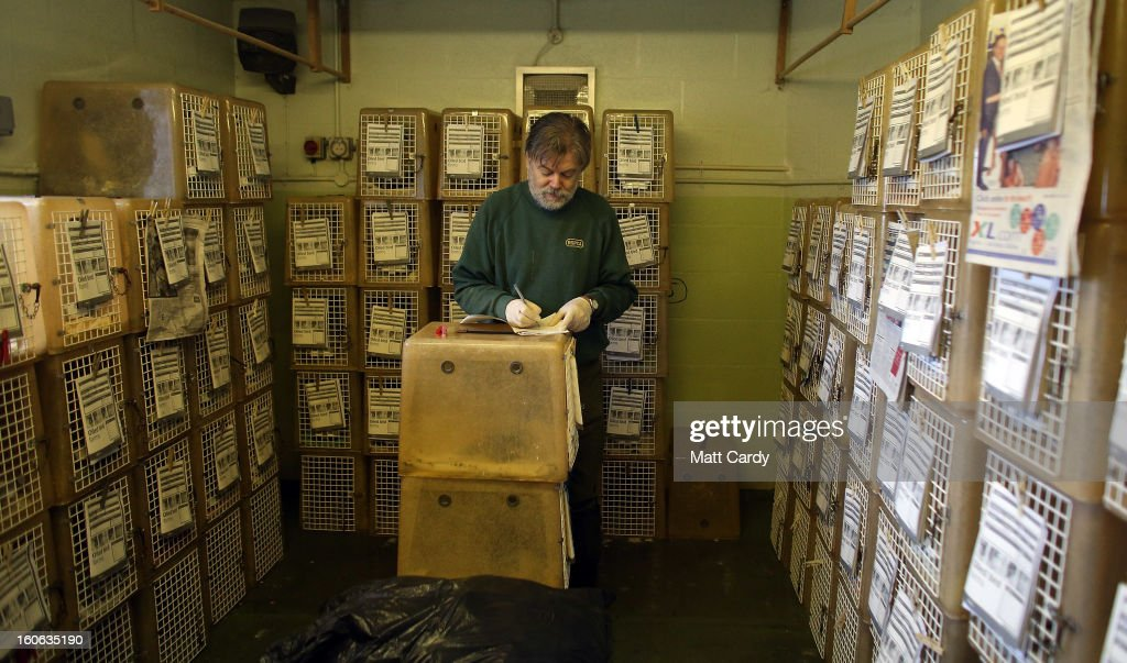 Wildlife assistant Mark Sinclair fills out a information form in front of cages full of rescued birds at the RSPCA West Hatch Wildlife Centre on February 4, 2013 near Taunton, England. The centre in Somerset is currently dealing with over 300 birds, mostly guillemots and some razorbills, that have been washed up all along the south coast of England covered in a yet-to-be indentified oil substance. Conservationists are warning it could be days before the true scale of the pollution spill affecting the sea birds is known as many more birds covered in the mystery sticky substance could have been blown out to sea by prevailing winds, leading to many more fatalities as they are unable to feed and become cold and exhausted.