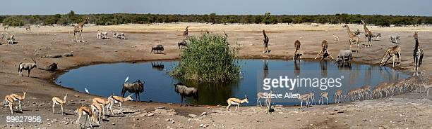 wildlife at a waterhole - waterhole stock pictures, royalty-free photos & images