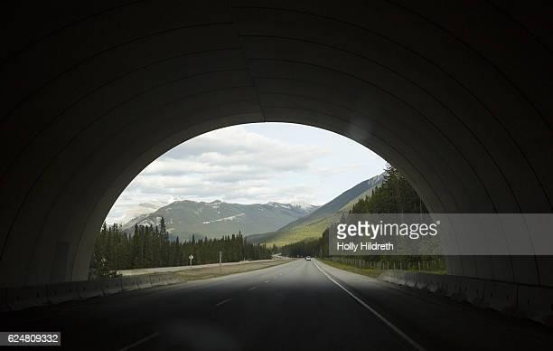 wildlife crossing bridge - tunnel stock-fotos und bilder