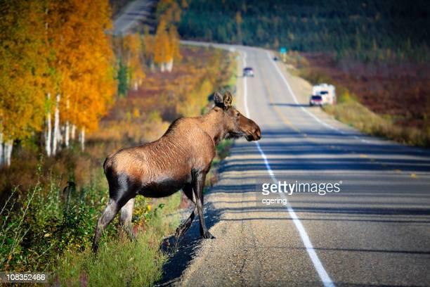 Wildlife crossing the highway