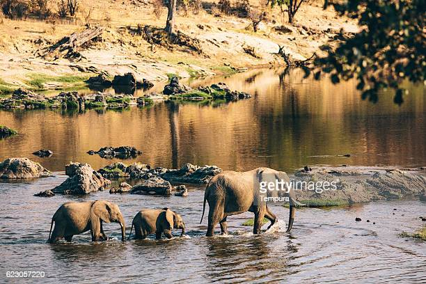 Wildlife elephants in Tanzania.