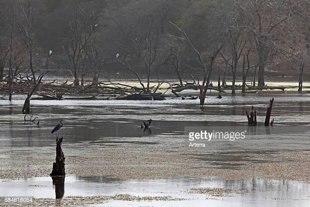 Wildlife in marsh at the Ranthambore National Park Sawai Madhopur Rajasthan India