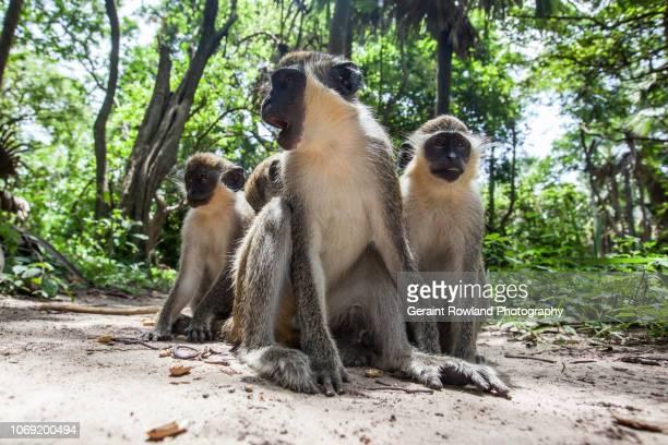 Wildlife in Senegal & The Gambia