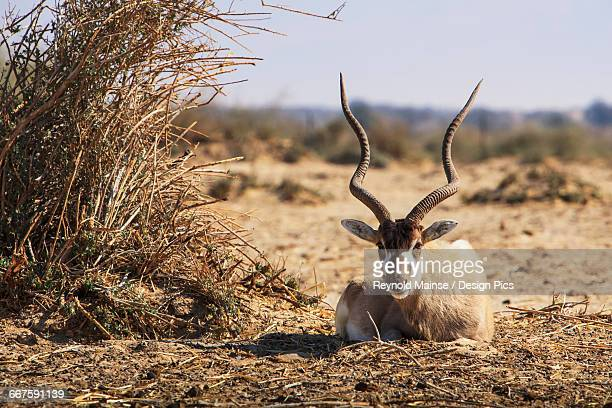 Wildlife in the Arava Valley