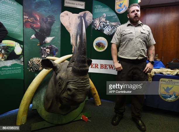 A wildlife officer stands beside a stuffed and smuggled rhinoceros head during an Operation Jungle Book media event at the US Fish and Wildlife...