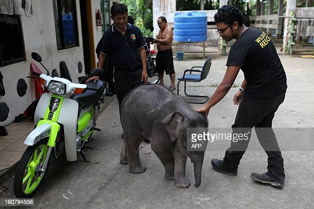 Wildlife officials attend to an orphaned threemonthold baby pygmy elephant 'Joe' at Lok Kawi Wildlife Park in Kota Kinabalu in Malaysia's Sabah state...