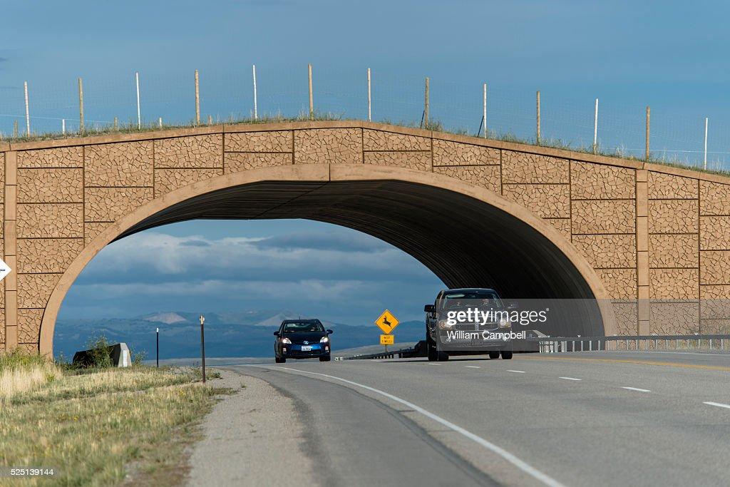 USA - Wyoming - Wildlife Overpass : News Photo