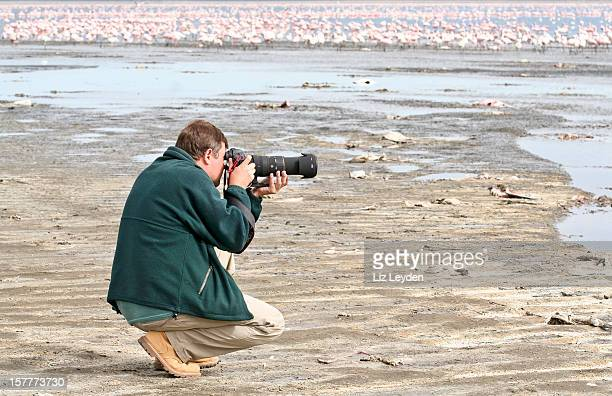 wildlife photographer, photographing flamingos: lake nakuru np, kenya - lake nakuru stock photos and pictures