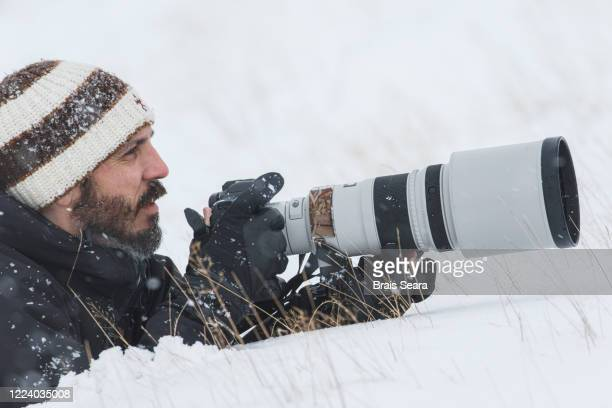 wildlife photographer - animals in the wild stock pictures, royalty-free photos & images