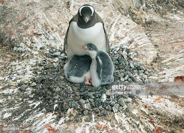 wildlife - cacca foto e immagini stock