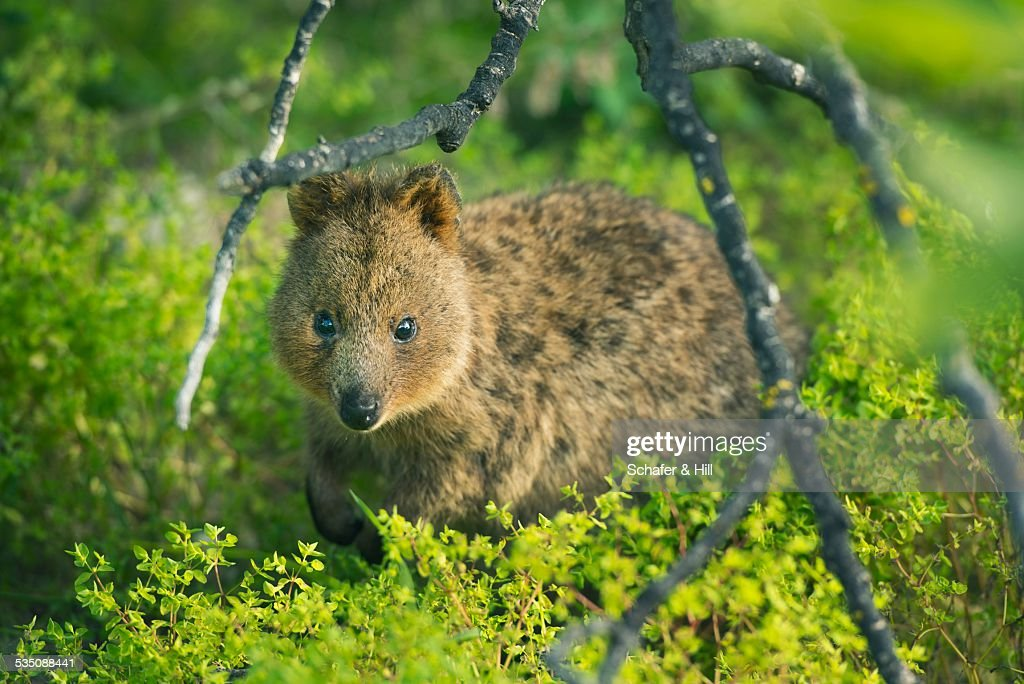 Wildlife : Stock Photo